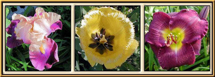 Iris, Lilies, Tulips, Daffodils