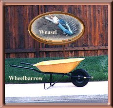 Wheelbarrow and Weasel