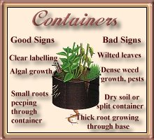 Container-grown Plants