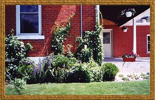 Shrubs, vines, perennials and annuals