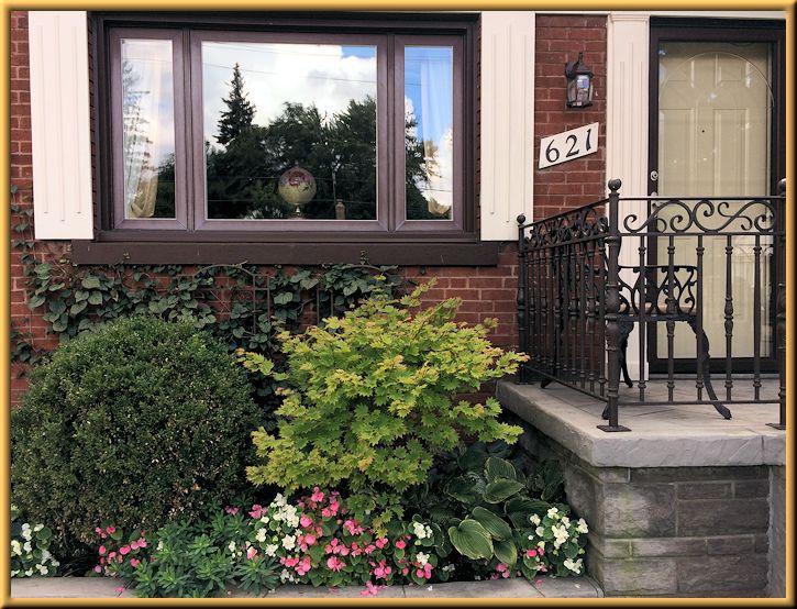 Boxwood Velvet, Japanese Maple, Hostas, Begonias in Front Garden