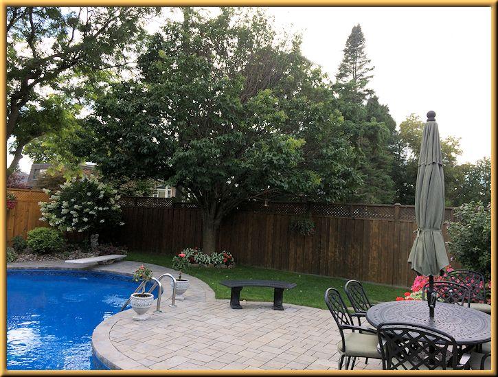Lilac Tree in Back Garden