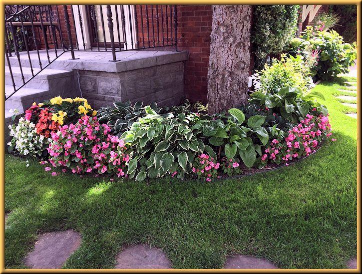 Shade Garden, Hostas, Begonias, Ferns in Garden
