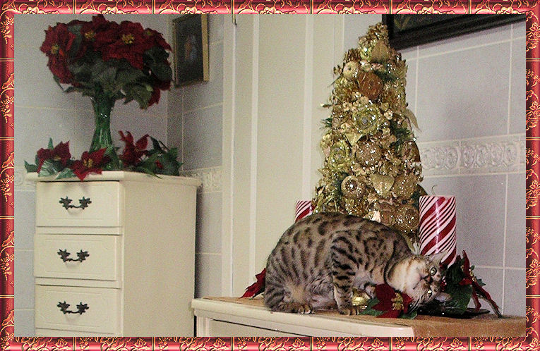 Bengal Cat Flopping by Christmas Tree
