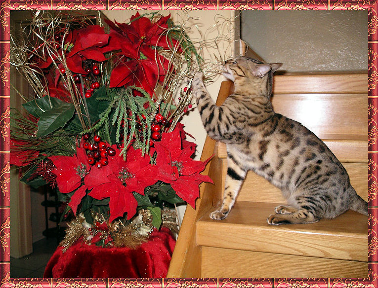 Bengal Cat Chewing Flowers